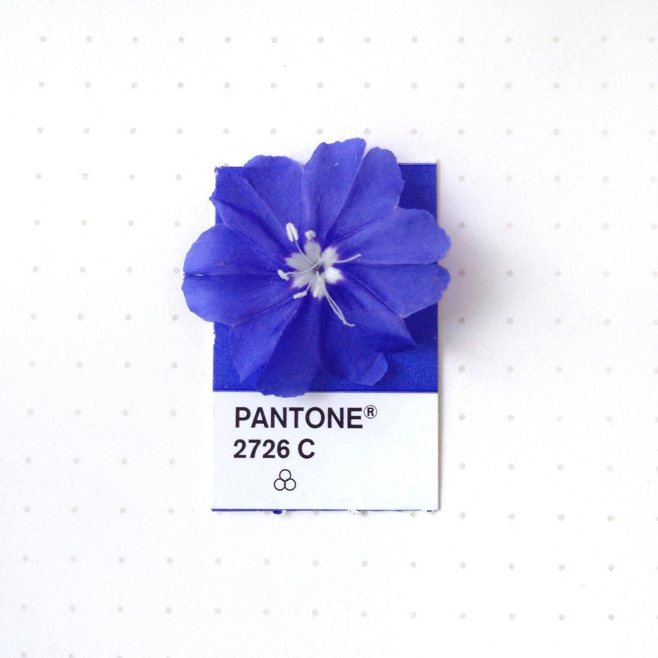 tiny-pms-blue-flower